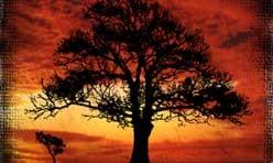 Three Dark Trees