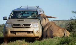 Is it a Moose on a Truck