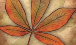 Red Leaf Series