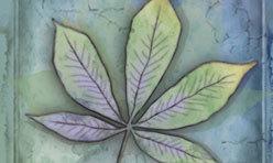 Blue Leaf Series